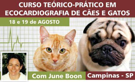 Curso Teórico-PráticoEcocardiografia de Cães e Gatos